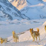 Best Winter Experiences Around the World