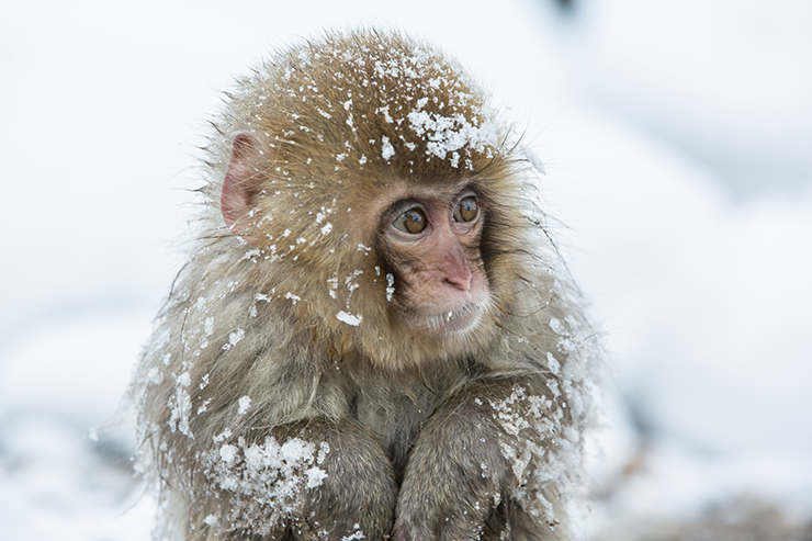 Japan - best winter experiences