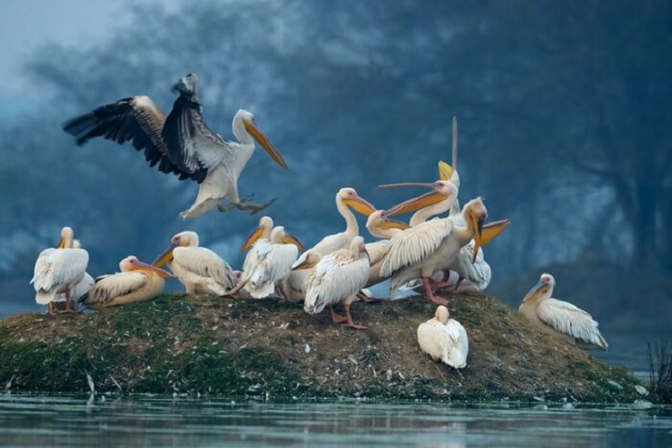Bharatpur Bird Sanctuary - where to go on a wildlife holiday in India