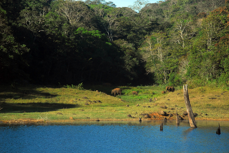 Periyar National Park - where to go on a wildlife holiday in India