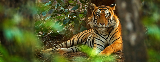 Where to go for a wildlife holiday in India