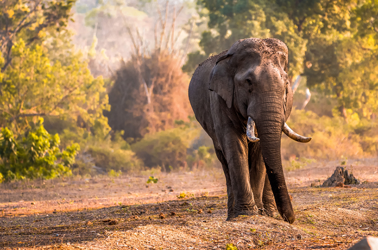 Bandipur National Park - where to go on a wildlife holiday in India