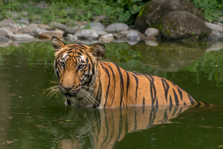 Sunderbans National Park - where to go on a wildlife holiday in India