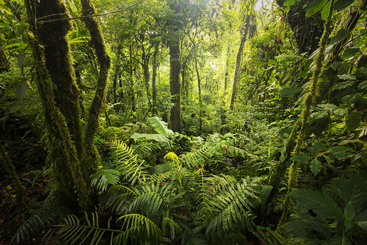 Costa Rica's cloud forests