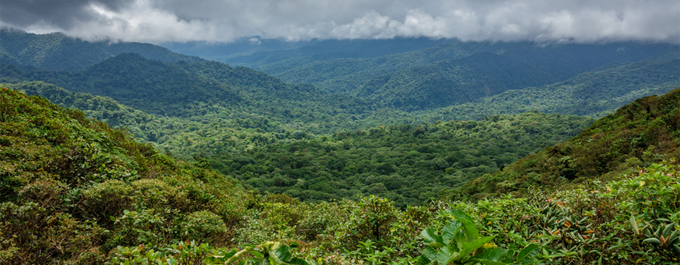 10 Interesting Facts about Costa Rica's Cloud Forests