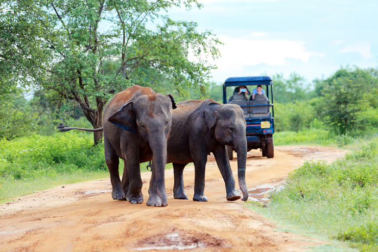Tourists in a jeep viewing elephants in Udawalawe National Park in Sri Lanka