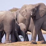 The Five Best Destinations to see Elephants in the Wild