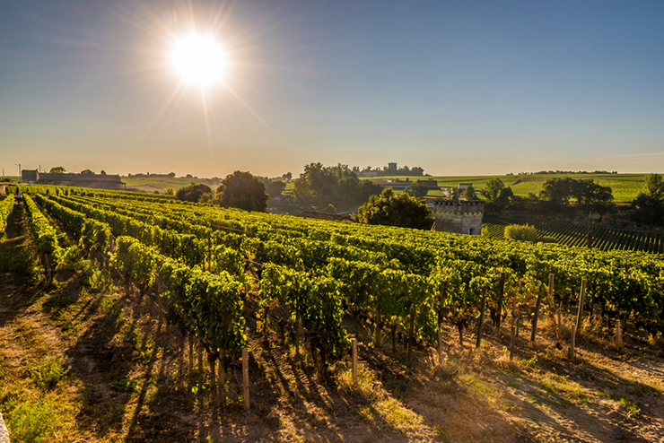 Bordeaux, one of the best wine tasting destinations