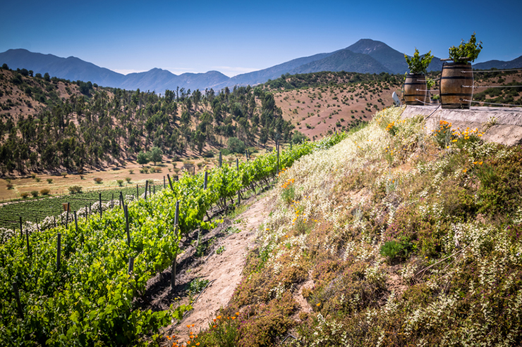 Casablanca Valley in Chile, one of the best wine tasting destinations