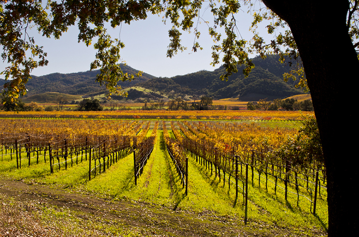 Napa Valley in California, one of the best wine tasting destinations