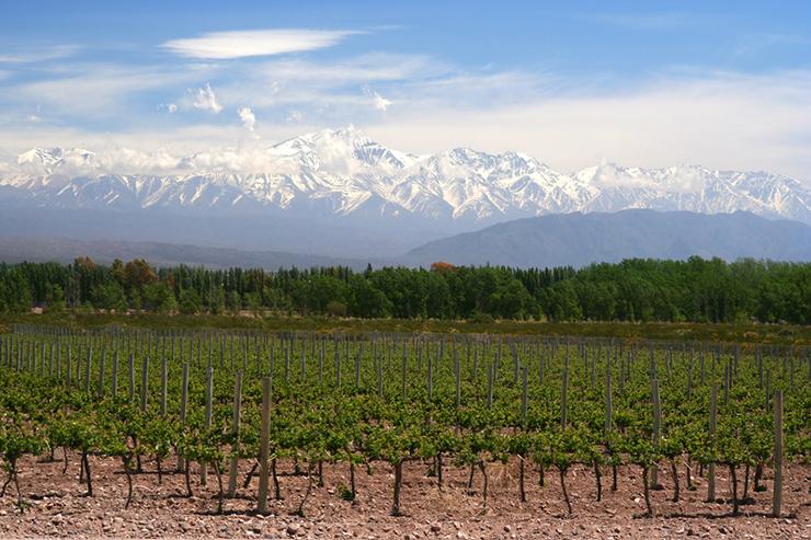 Organic vineyards near Mendoza in Argentina, one of the best wine tasting destinations