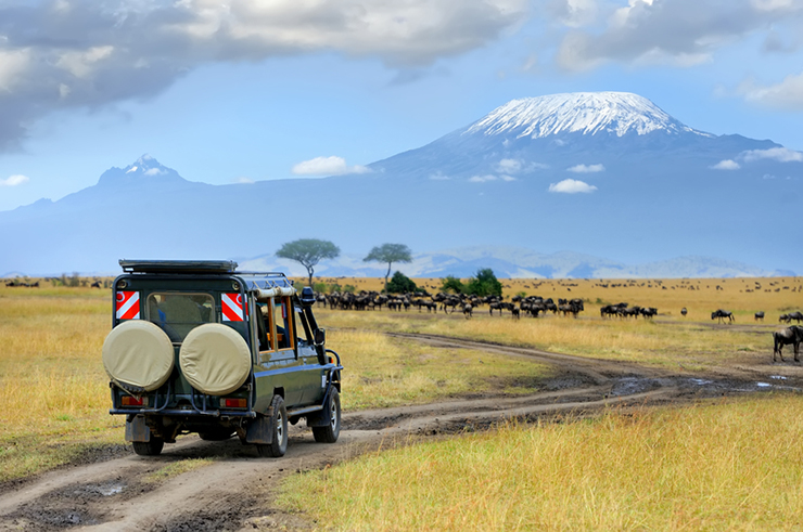 Safari game drive with the wildebeest in Kenya, one of the best family holiday destinations