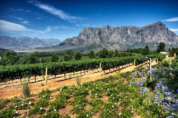 Stellenbosch wine region in South Africa, one of the best wine tasting destinations