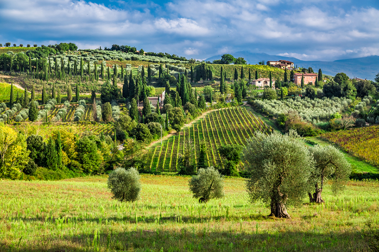 Vineyards in Tuscany, one of the best wine tasting destinations