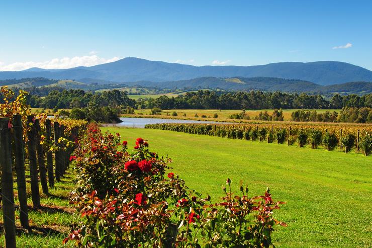 Yarra Valley in Australia, one of the best wine tasting destinations