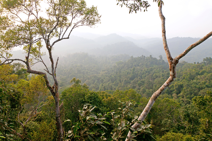 Forests on the Bokeo Nature Reserve in Laos
