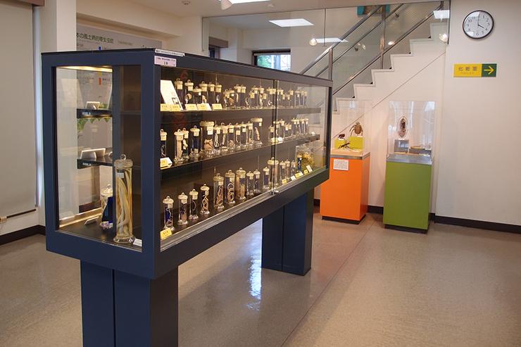 Exhibit at the Parasite Museum in Tokyo