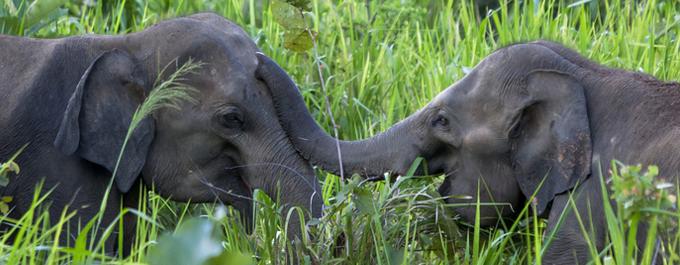 Why Sri Lanka is the Next Big Wildlife Destination