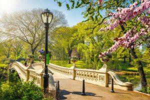 Bow bridge in Central park at springtime
