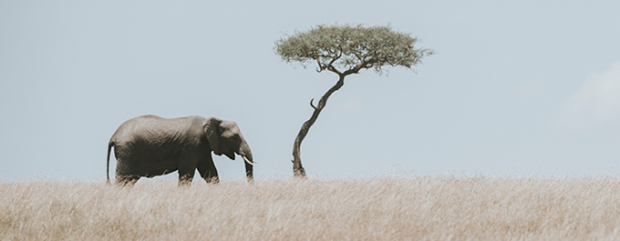 Masai Mara: A photo journey with Aleksandar Jason