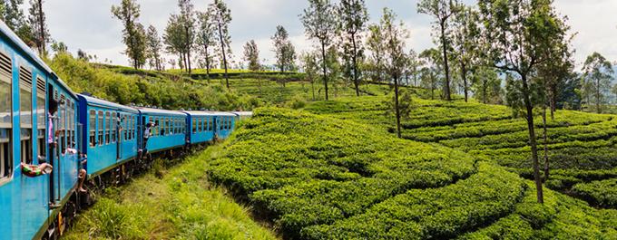 Kandy to Nuwara Eliya by Train: What to Expect