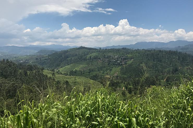 Views of tea estates from the Kandy to Nuwara Eliya Train, Sri Lanka