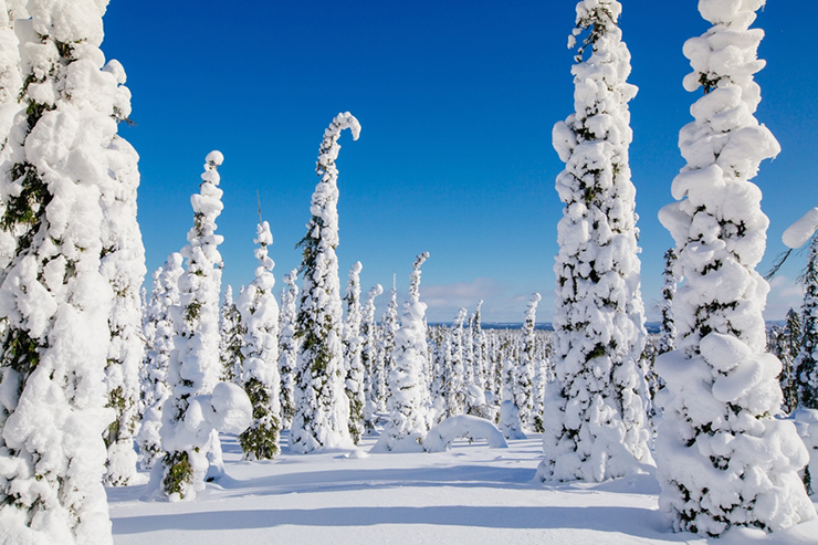Beautiful winter landscape with snowy trees in Lapland, Finland.