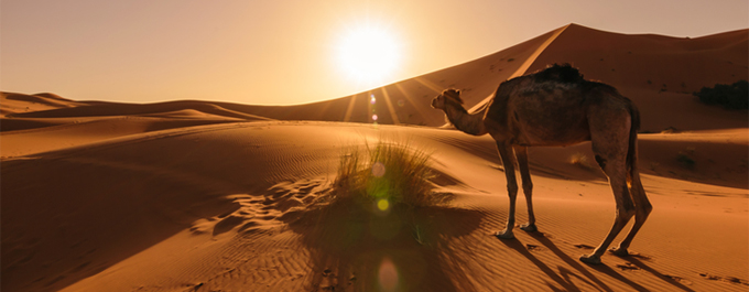 10 Interesting Facts About the Sahara Desert
