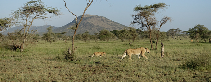 Our East African Adventure