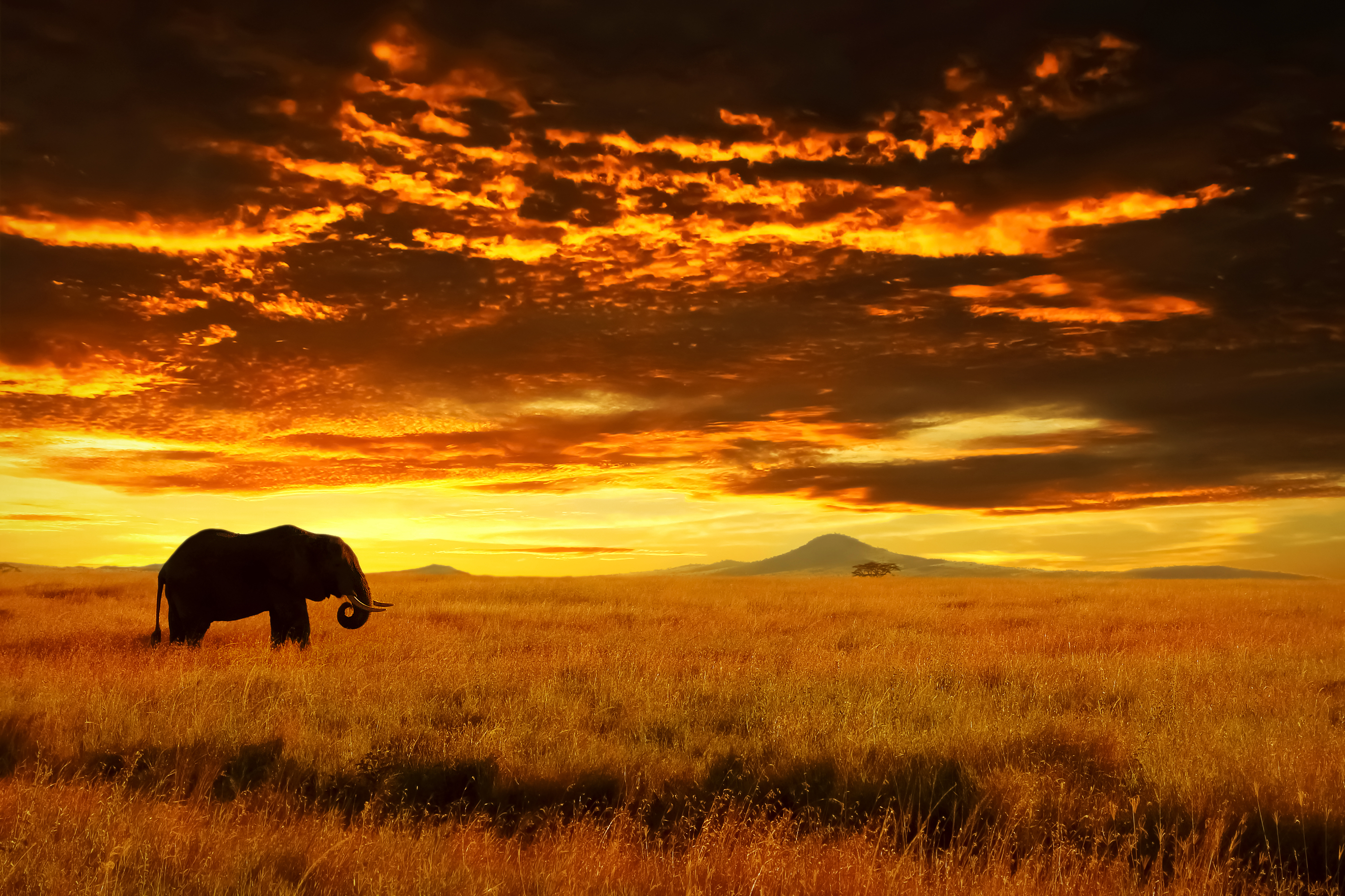 An elephant on a sunset stroll in Serengeti National Park