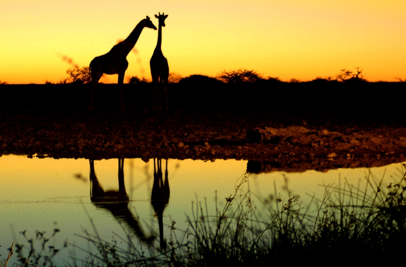 Celebrating World Wildlife Day