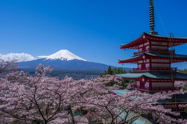 Cherry blossom and Mt Fuji in Japan