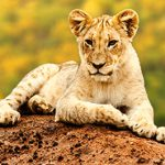 Counting Down the 7 Most Incredible Wildlife Travel Experiences (9 minute read)