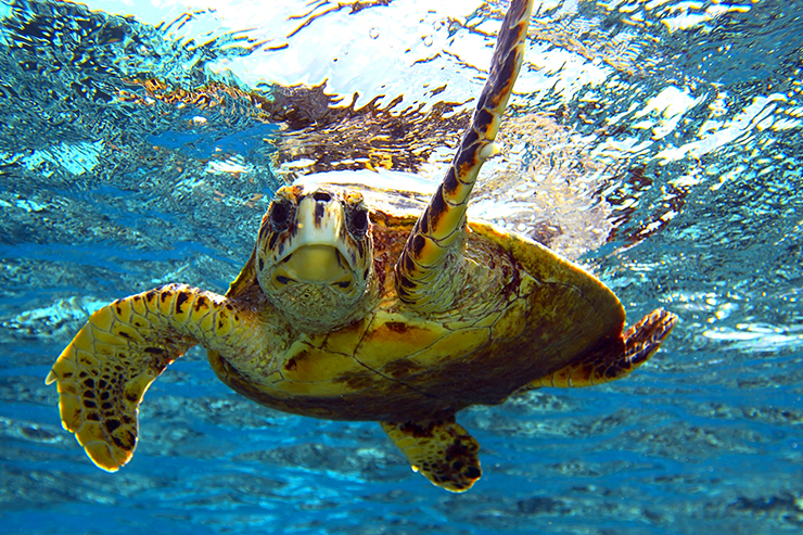sea turtle - best time to visit Egypt