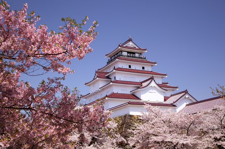 Aizuwakamatsu Castle - Japanese cherry blossom