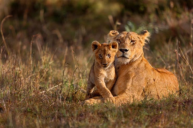 Sư tử đã giữ được vị trí của mình trong New Big Five