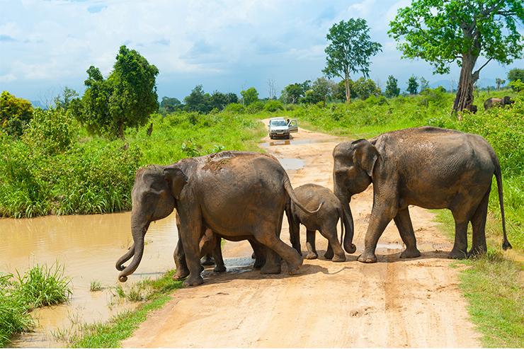 Một gia đình voi trong Vườn quốc gia Udawalawe