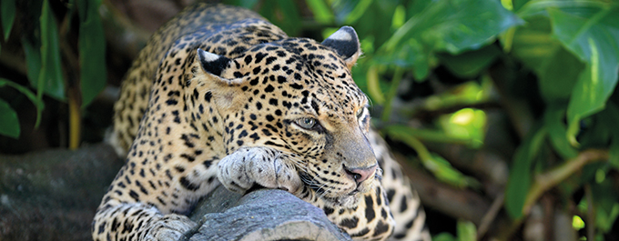 The Best Places to Spot Sri Lanka's Amazing Wildlife (7 minute read)