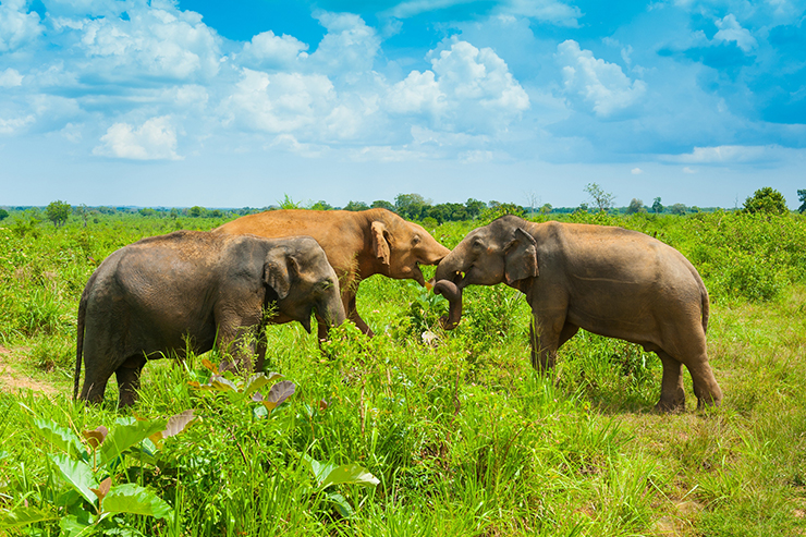 Sri Lanka was also moved off the red list at the last UK travel update