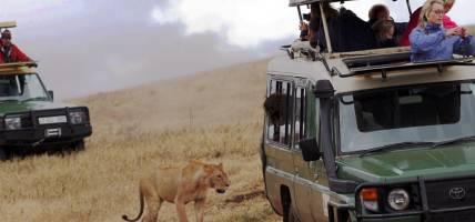 00-jeep-safari