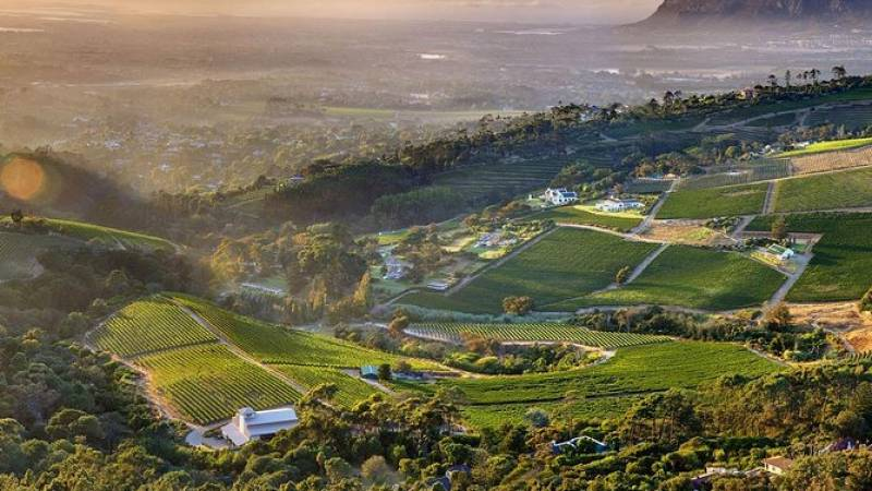 Full-day Cape Point and Constantia Wine Tasting Private Tour from Cape Town