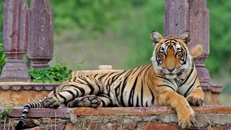Private Wildlife Safari Tour in Ranthambore from Jaipur