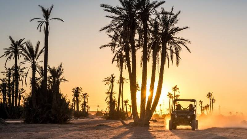 Marrakech Desert and Palm Grove Buggy Tour Including Berber Village