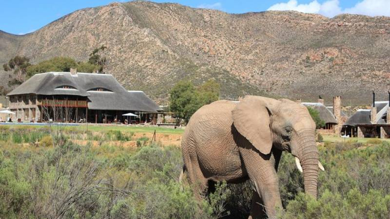 Wild Life Safari Private Transfer To Aquila Reserve excluding entrance fees