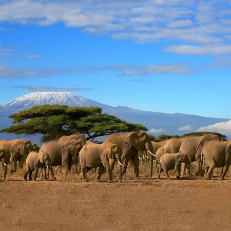 A herd of elephants in Amboseli NP