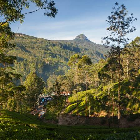 Adam's Peak - On The Go Tours