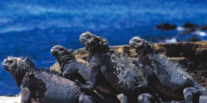 Amazing-Amazon-Itinerary-4-Ecuador-&-Galapagos-South-America