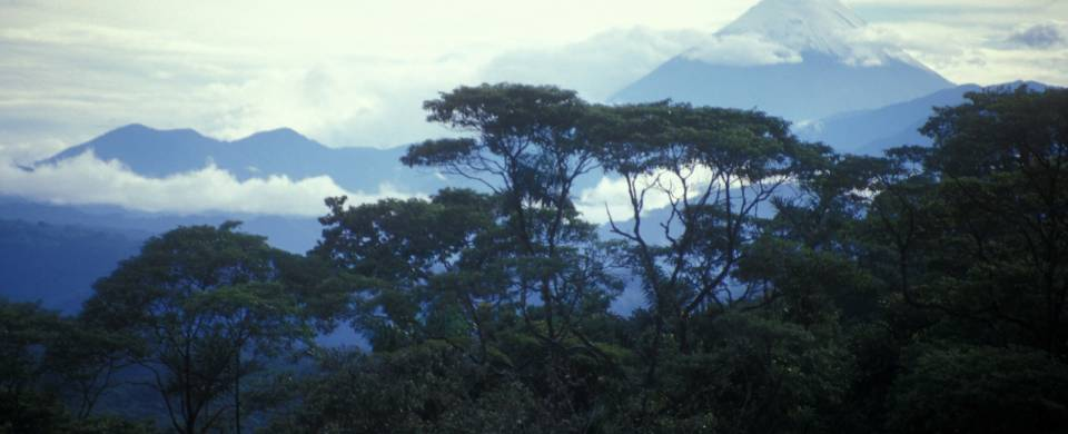 Misty clouds over the Amazon Jungle in Ecuador