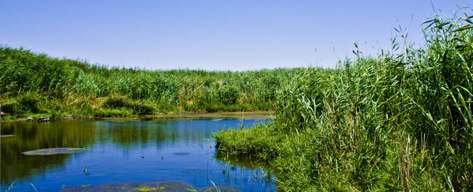 Lush vegetation fringing the glittering water in the Azraq Wetland Reserve