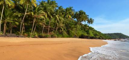 Beautiful landscape of palm trees and beach in Goa